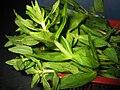 Ngổ (Limnophila aromatica).JPG