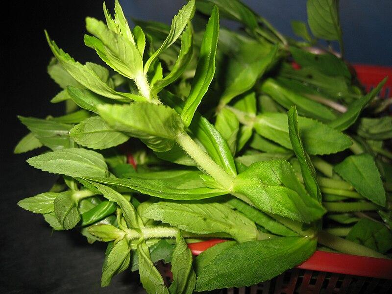 File:Ngổ (Limnophila aromatica).JPG