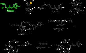 Epothilone - Figure 3