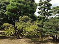 Ninomaru Garden of Nijo Castle 11.JPG