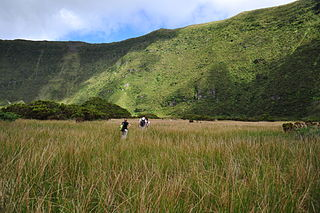 Nature Park of Faial Protected area of the island of Faial