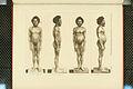 Nova Guinea - Vol 3 - Plate 41.jpg
