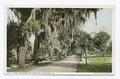 Oaks, Bonaventure Cemetery, Savannah, Ga (NYPL b12647398-73884).tiff