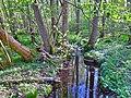 Oldtidsskoven - vandløb.jpg