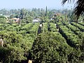 Orange Groves, Prospect Park, Redlands 2006 (6944587177).jpg
