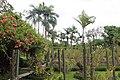 Orchid Garden Bali Indonesia - panoramio (20).jpg