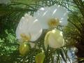 Orquidea006.png