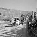 Ossenkar met oogstkuipen en tractor met druivenplukkers op de wijnberg, Bestanddeelnr 254-4191.jpg