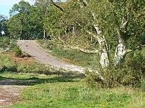 Oxshott Heath (geograph 2117522).jpg