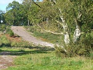 Oxshott - Image: Oxshott Heath (geograph 2117522)