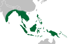 Oxystophyllum distribution map.png