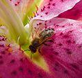 P1080296 - Flickr - gailhampshire.jpg