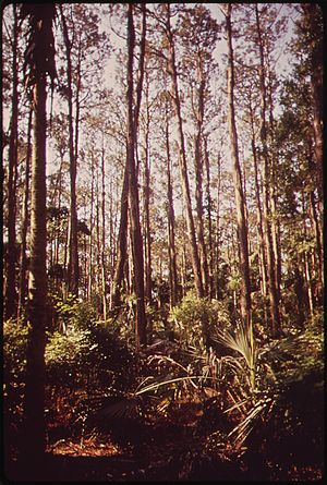 PRIMEVAL FOREST ON BULLS ISLAND, A NATIONAL GA...