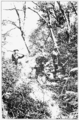 PSM V73 D181 Planting pine seeds in san gabriel national forest california.png