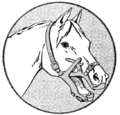 PSM V88 D186 Veterinary aid for horses.png