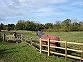 Paddocks in Elvaston Castle Park - geograph.org.uk - 1023451.jpg