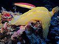Palma Aquarium-Nudibranquio.jpg