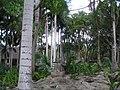 "Palmeto a ""Cancun"" - panoramio.jpg"