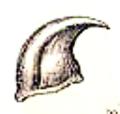 Panagaeus cruxmajor maxille.png