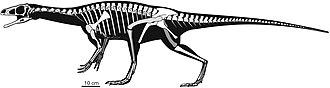 Panphagia - Silhouette reconstruction of the skeleton of Panphagia protos