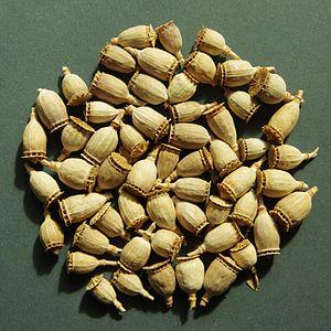 Papaver rhoeas - Capsules