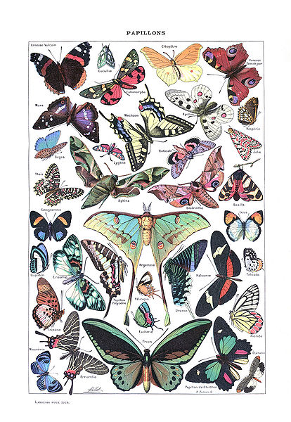 Fichier:Papillons (Larousse pour tous,1907-1910).jpg
