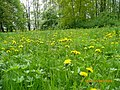 Park w Strzelcach Opolskich - panoramio - romstar.jpg