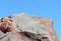 Parque Nacional Talampaya - Petroglifos.jpg