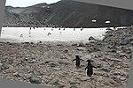 Paulet Island (24000682373).jpg