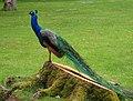 PeacockValencay.jpg