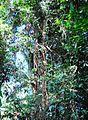 Pepohonan di semak belukar (4).JPG