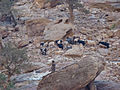 Petra - Up to Al Deir (9779207646).jpg