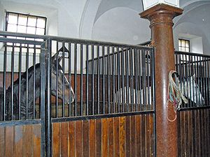 Pferde Horses in stable2.jpg