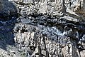 Phosphoria Formation (Permian; Astoria Hot Springs roadcut, Teton County, Wyoming, USA) 31 (49191819808).jpg