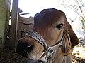 Photo By Raj Odedra Porbandar Mo . . . 07698787895 - panoramio (10).jpg