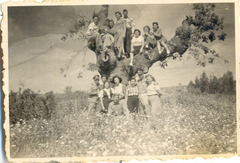 גבעת עדה נוער על עץ הזוטא עם חיילי הבריגדה