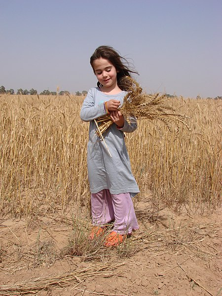 ילדה מחזיקה אלומת שיבולי חיטה