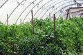 PikiWiki Israel 39850 Agriculture in Israel.JPG