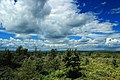 Pine Hill (Revisited) (1) (9446749969).jpg