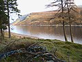 Pine and Larch at Loch Ericht - geograph.org.uk - 113988.jpg