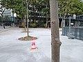 Place Jussieu Plantation Arbres Travaux 3.jpg