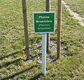 Platanus Bronislaw, Kampus Morasko.JPG