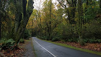 Point Defiance Park - Image: Point Defiance Forest