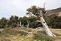 Pokroucené stromy - panoramio.jpg