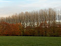 Poplars and beeches, East Stowell - geograph.org.uk - 282668.jpg