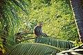 Posing Monkey.jpg