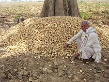 Potatofarmer.jpg