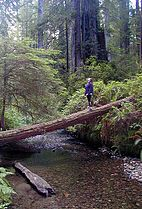Prairie Creek, Redwood NP, Calif.jpg