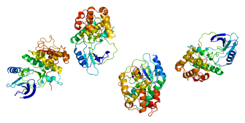 500px-Protein_CDK7_PDB_1ua2.png