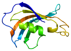 Protein FKBP1B PDB 1c9h.png